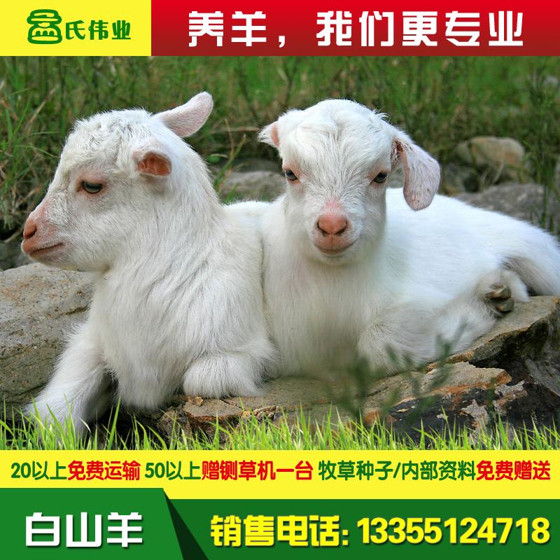白山羊-24.jpg