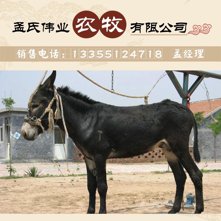 肉驴养殖基地欢迎你
