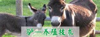 西门塔尔牛图片,肉牛,肉牛养殖厂,鲁西黄牛图片